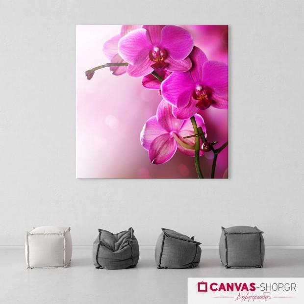 Ροζ Λουλούδια , πίνακας σε καμβά