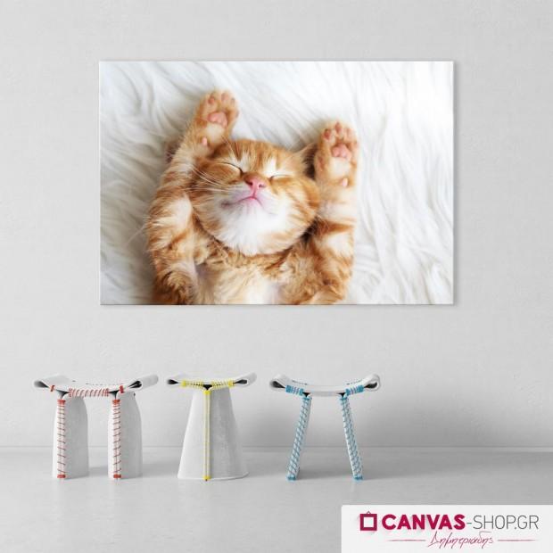 Γάτα, πίνακας σε καμβά
